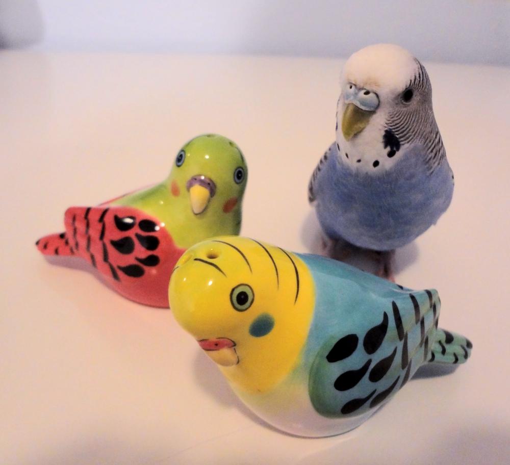 игрушки для попугаев