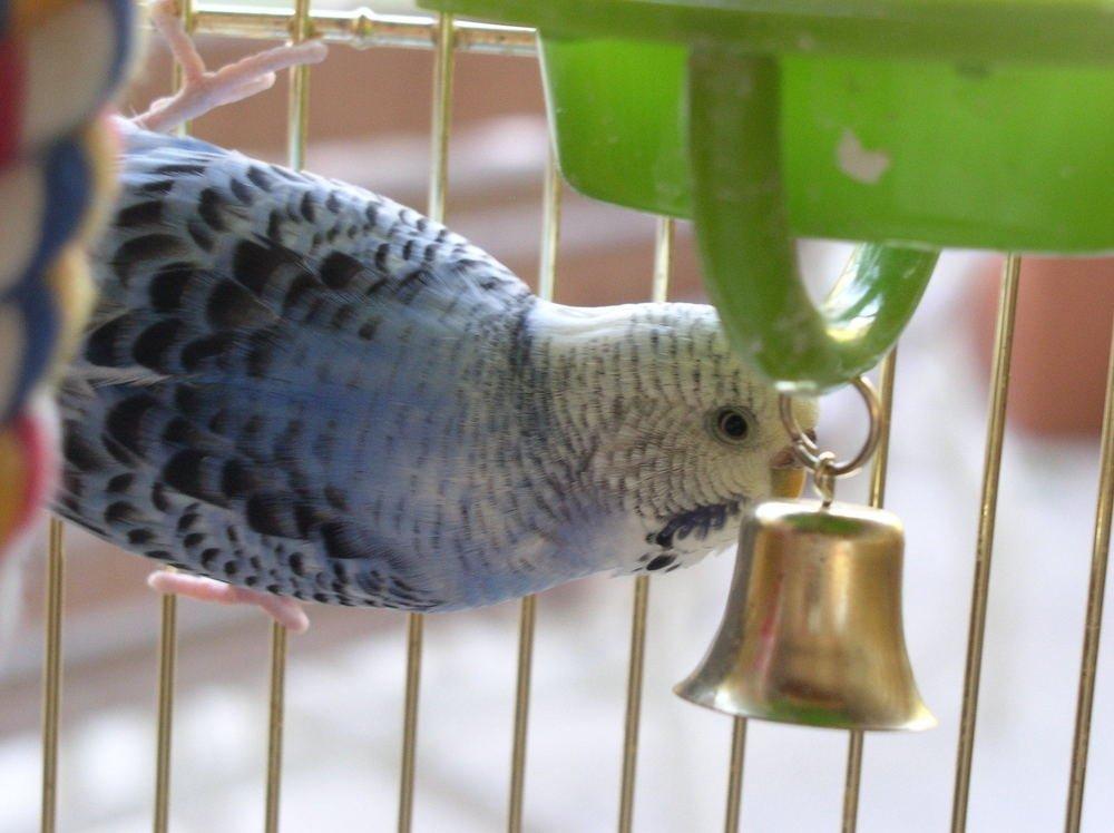 колокольчик для попугая