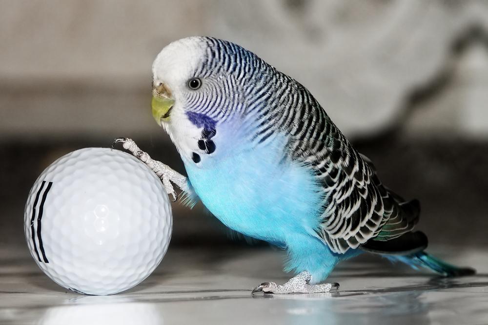 мячик и попугайчик