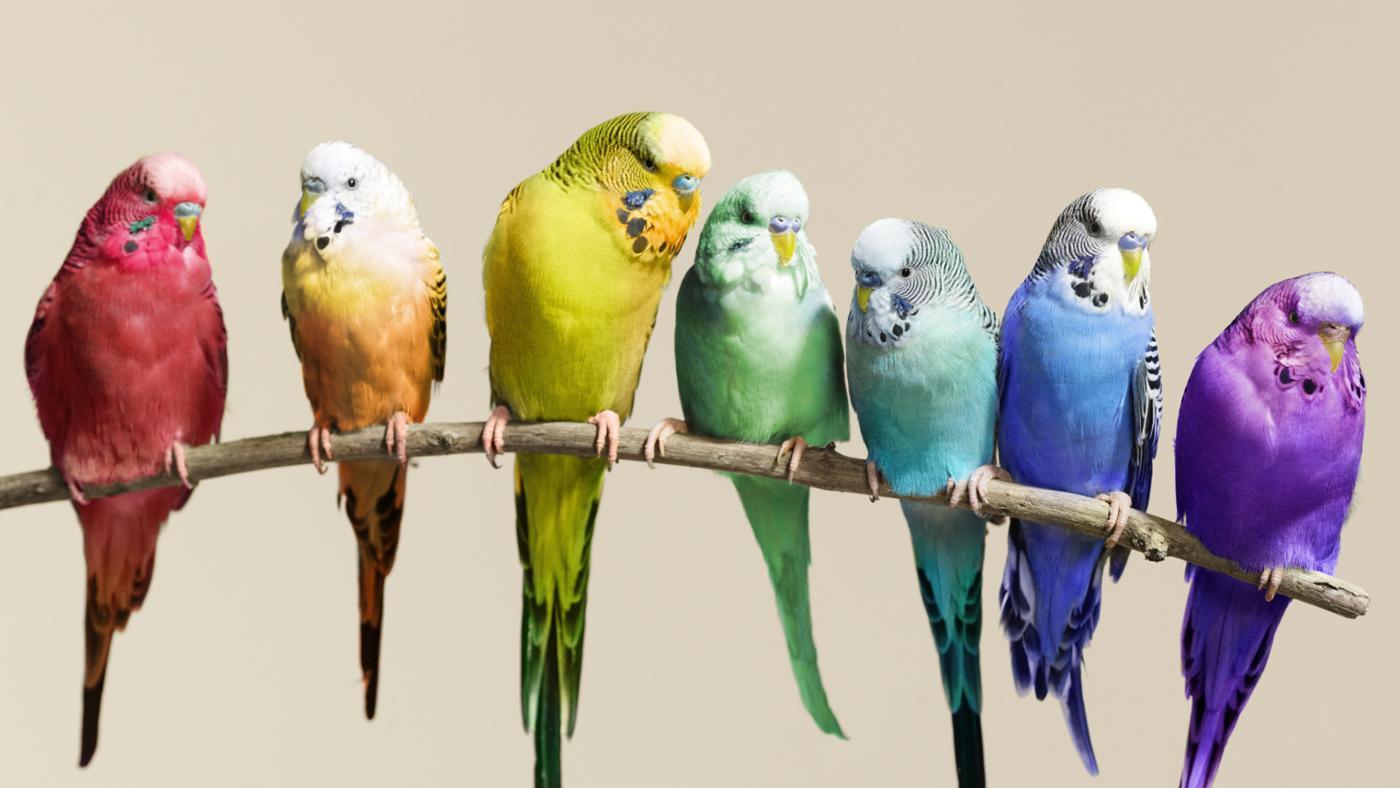 разноцветные волнистики