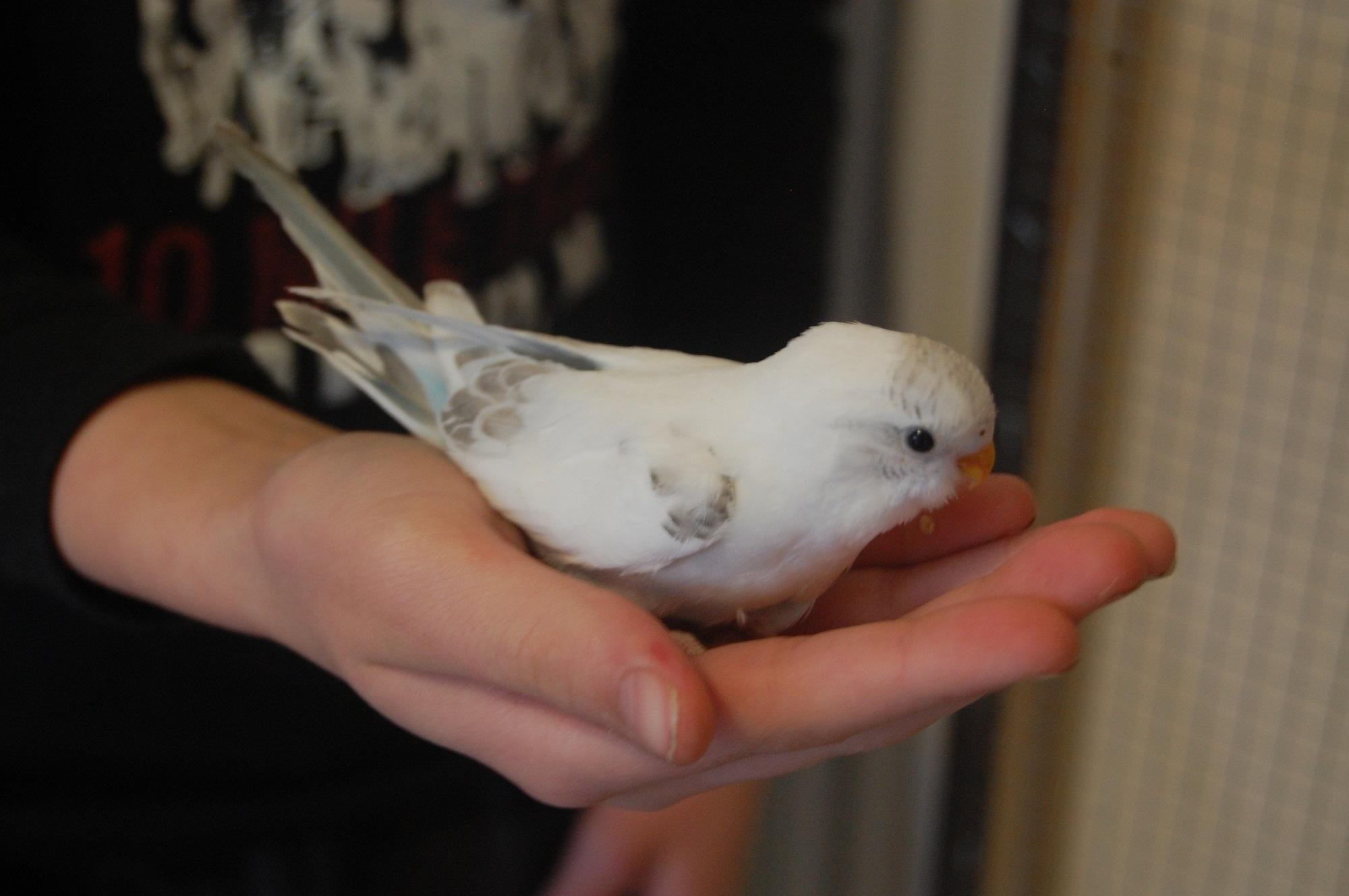 беленький птенчик