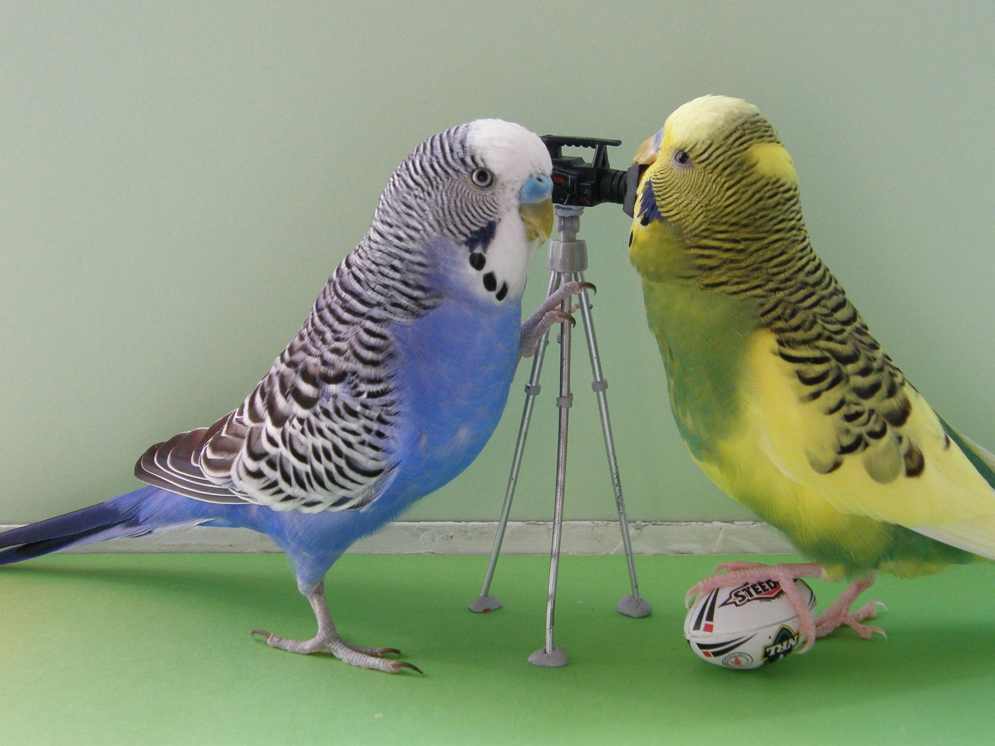 игрушки для волнистых попугаев