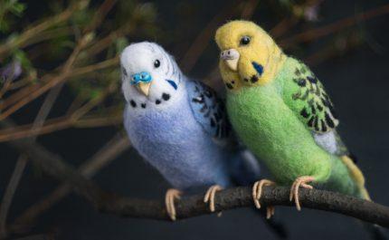 плюшевые волнистые попугаи