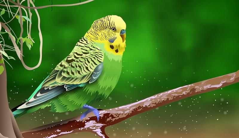 рисунок волнистый попугай