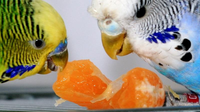 едят апельсин