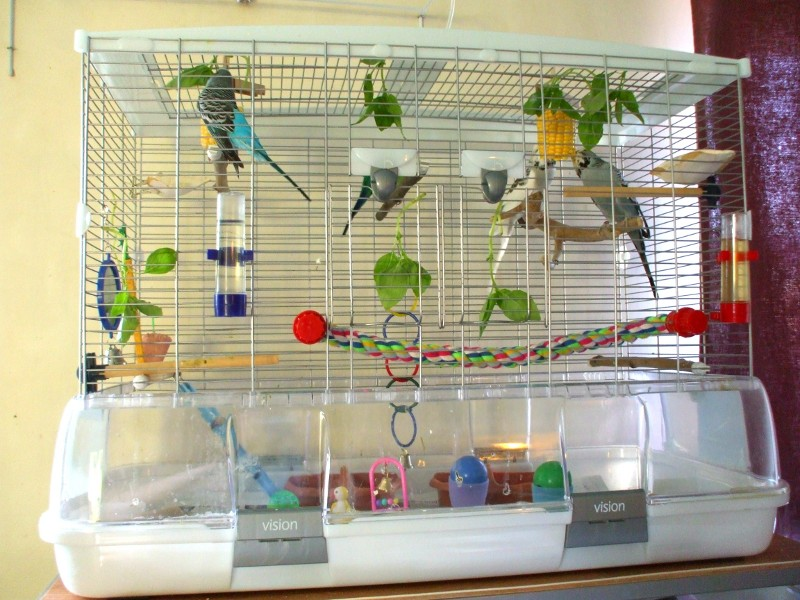 клетка для попугая волнистого