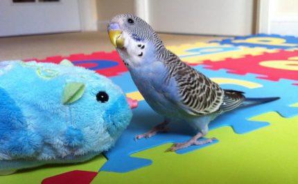 попугай и игрушка