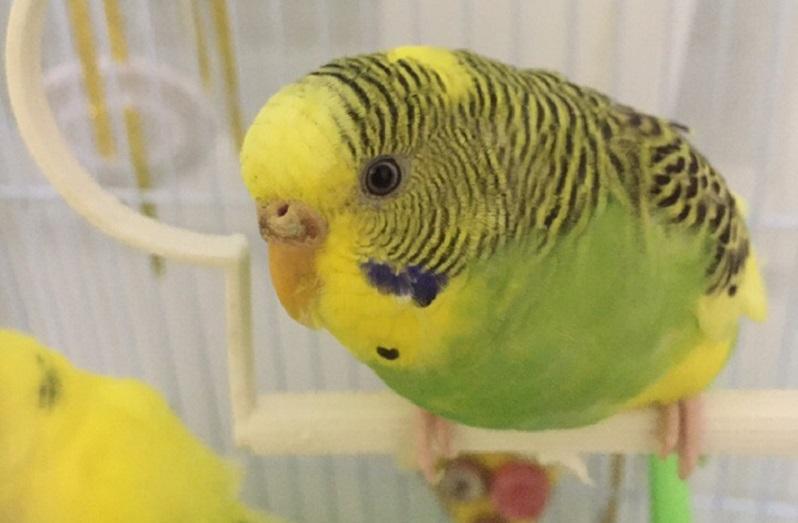 попугай сидит и смотрит