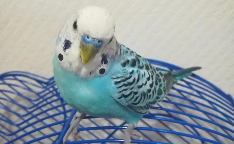 красивый птах