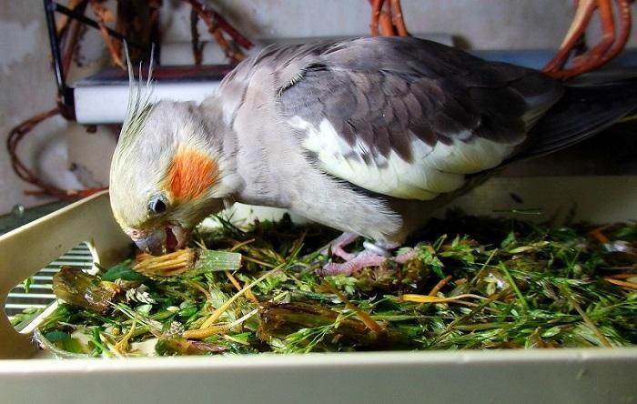 кушает траву