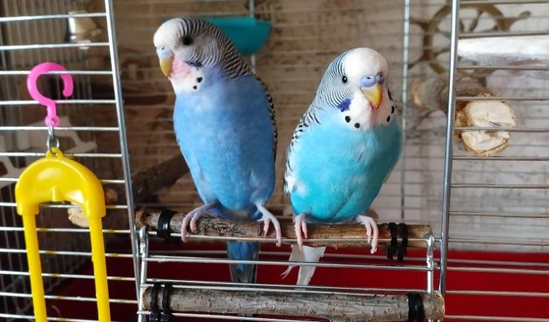птички у клетки